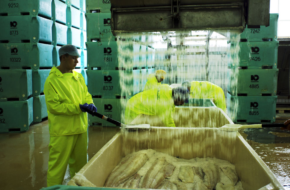 Workers spread salt on large fish fillet at Maru Seafood fish factories in Klaksvik the second largest city in the Faroe Islands. Fishing, fish farming and fish processing account for a quarter of the gross factor income and Fish account for 94% of exports from the Faroe Islands.
