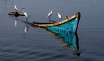 Egrits-on-Sunken-Boat-No-5-20111216_6570