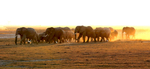 Elephant-herd-on-the-move-at-Dusk-9W2A7044