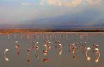 Flamingo-Reflections-No-1-Cropped-9W2A6892-copy-copy-copy