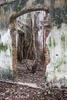 JAFFNA-Beautiful-Wall-w-Tree-NOV-2014-NO-3_20141122_9705-_1_-copy-copy