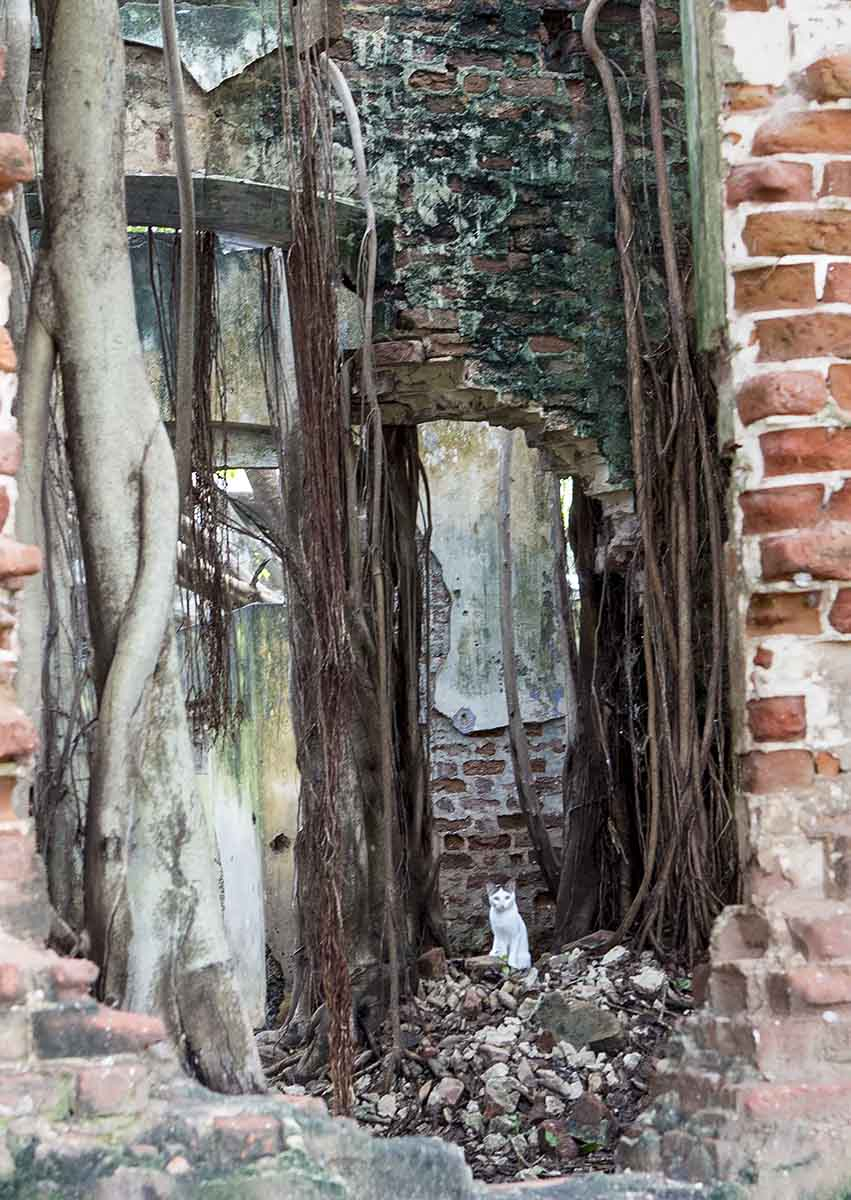 JAFFNA-Window-Vines-_-Kitten---Window-_-Vines-NOV-2014-NO-3_20141122_9689