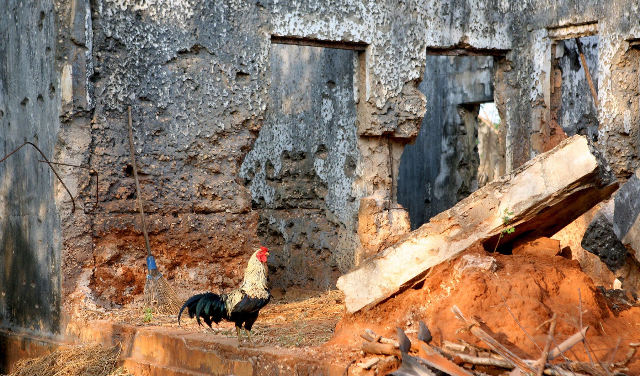 ROOSTER-JAY_S-VILLAGE-20120331_4003