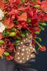 Suri-Woman-w-Red-Flowers-No-7-9W2A0492-copy-copy