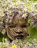 Suri-girl-Portrait-w-beautiful-flowers-9W2A2776