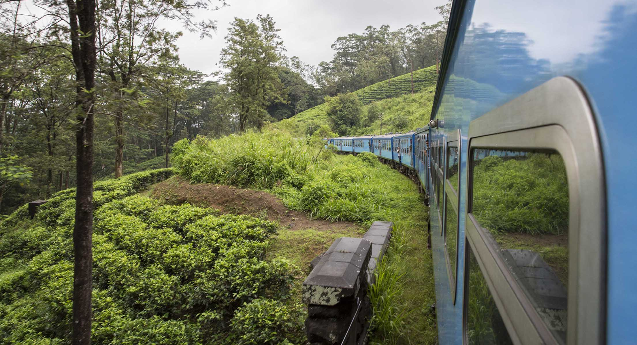 Passing Through Tea Plantation
