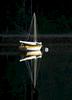 WS-IG-Sailboat-at-Night-_-Quissett-_MG_1465-copy-copy