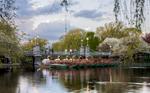 WS-Swan-Boats-No-1--Public-Garden-IMG_2987