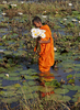 WS-Young-Monk-Collecting-Lotus-Mihintale-far-view-IMG_8711-copy-copy