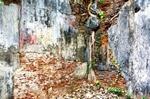 Wall-in-Old-Secretariat-in-Jaffna-Town-20120401_4289-2