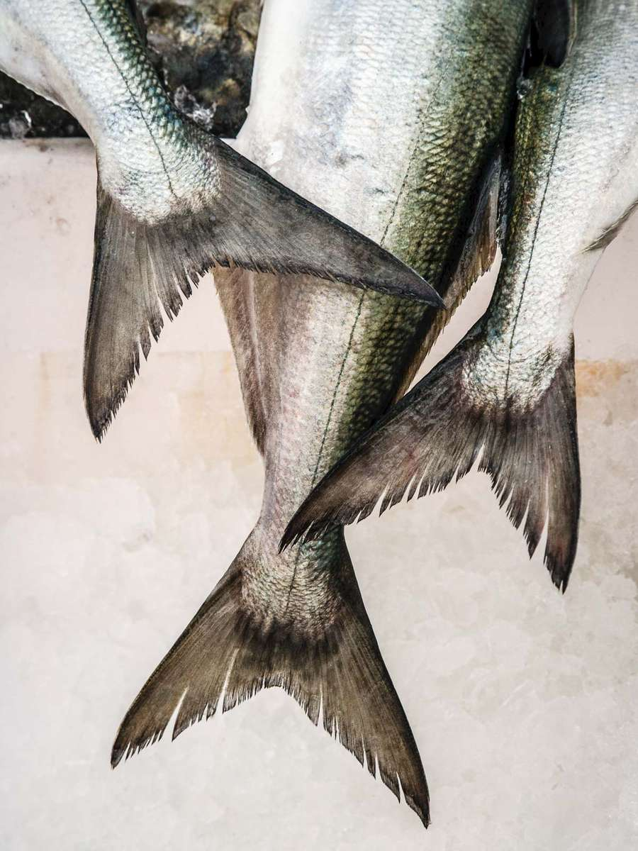 bluefish_tails