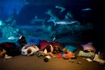 During Albuquerque Aquarium's monthly sleep over, Doug Hamann, left, gazes into the ocean tank. His wife, Jenn, reads a bed time story to her son, Brayden, 4, and Michael Rodriguez, 4. Next to them is Kara Rodriguez, 7. Participants are allowed to sleep anywhere in the aquarium with most people bedding down between 10:30 and 11:00 p.m.