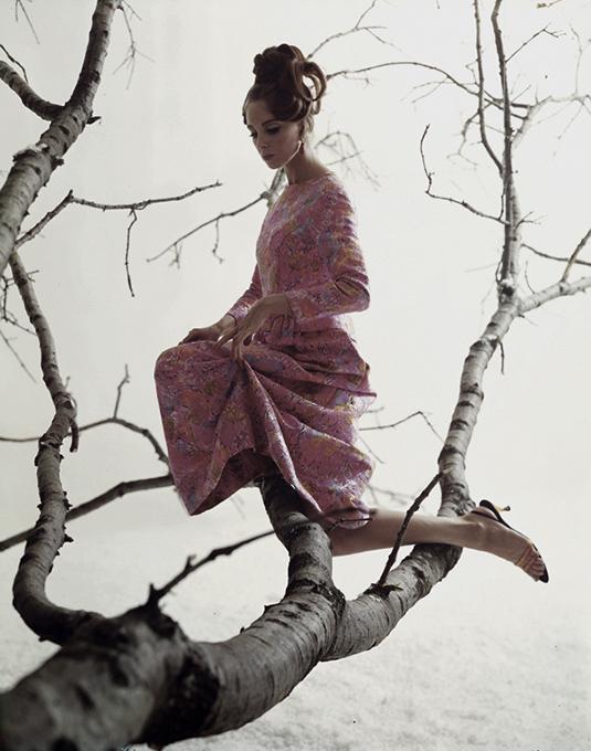 antonia_tree