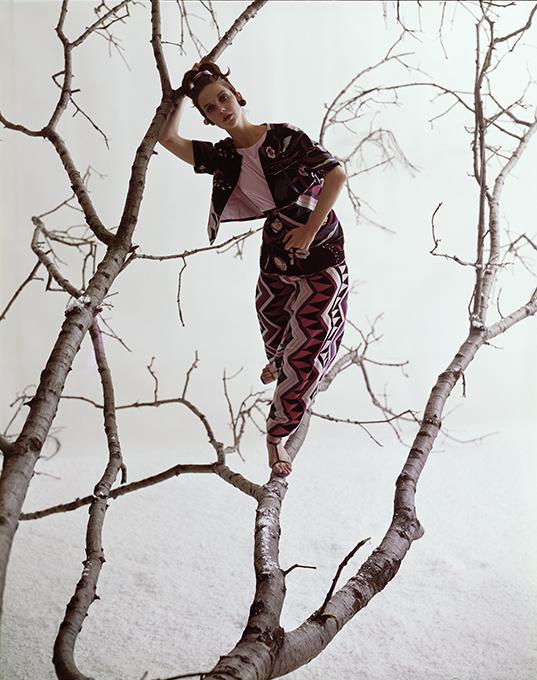 donna_tree