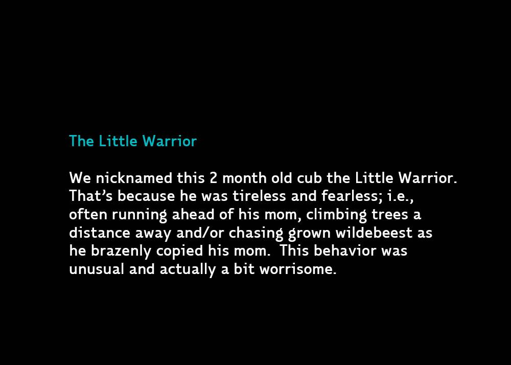 1-TheLittleWarrior