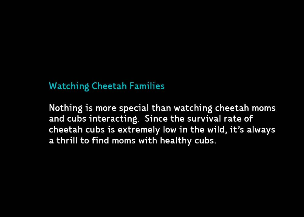 1-WatchingCheetahs