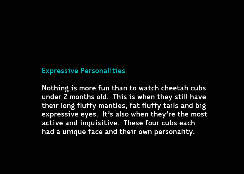 2-ExpressiveCubs-Jul15-2015