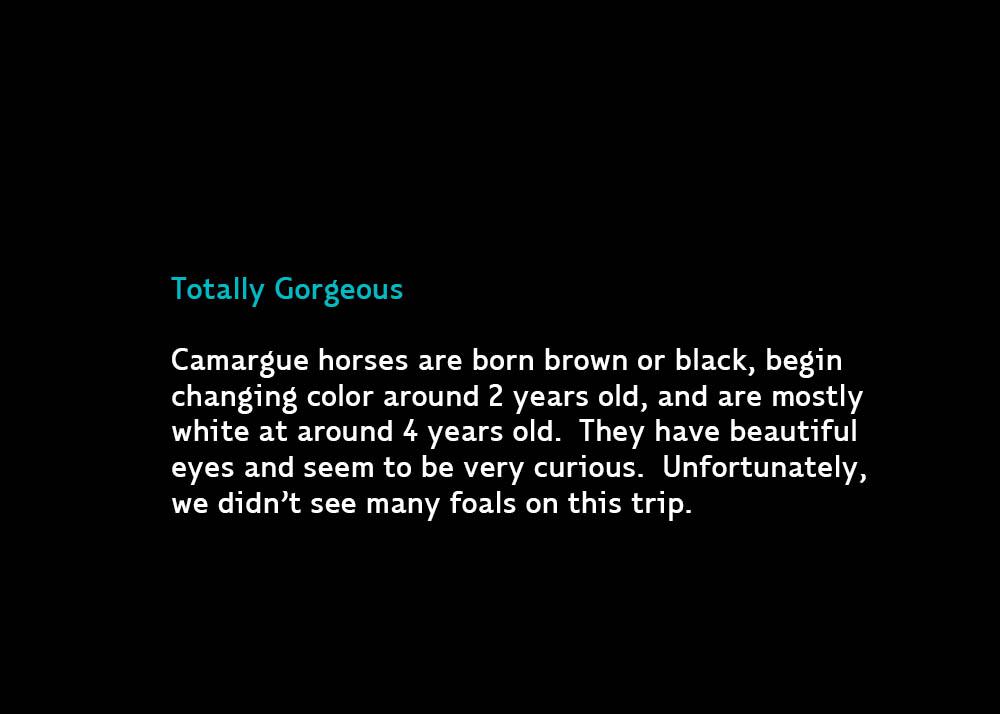 2-GorgeousCurious