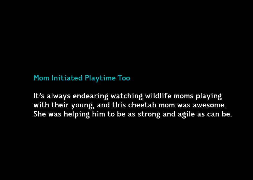3-Playtime