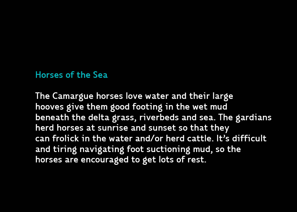 4-HorsesoftheSea