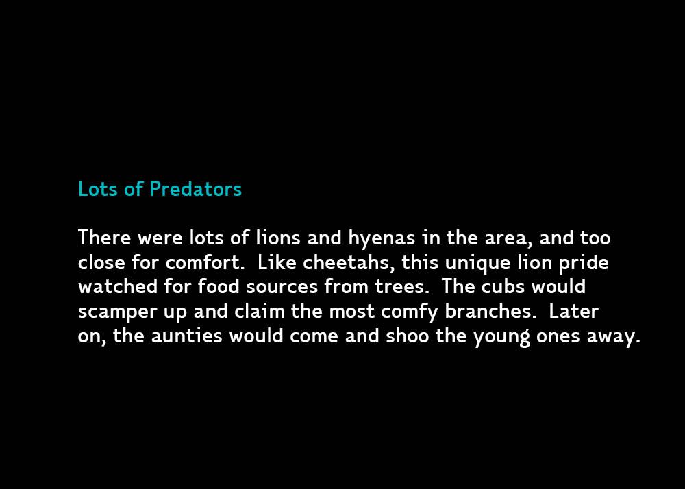 4-PredatorLionsTrees