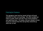 4-Predators