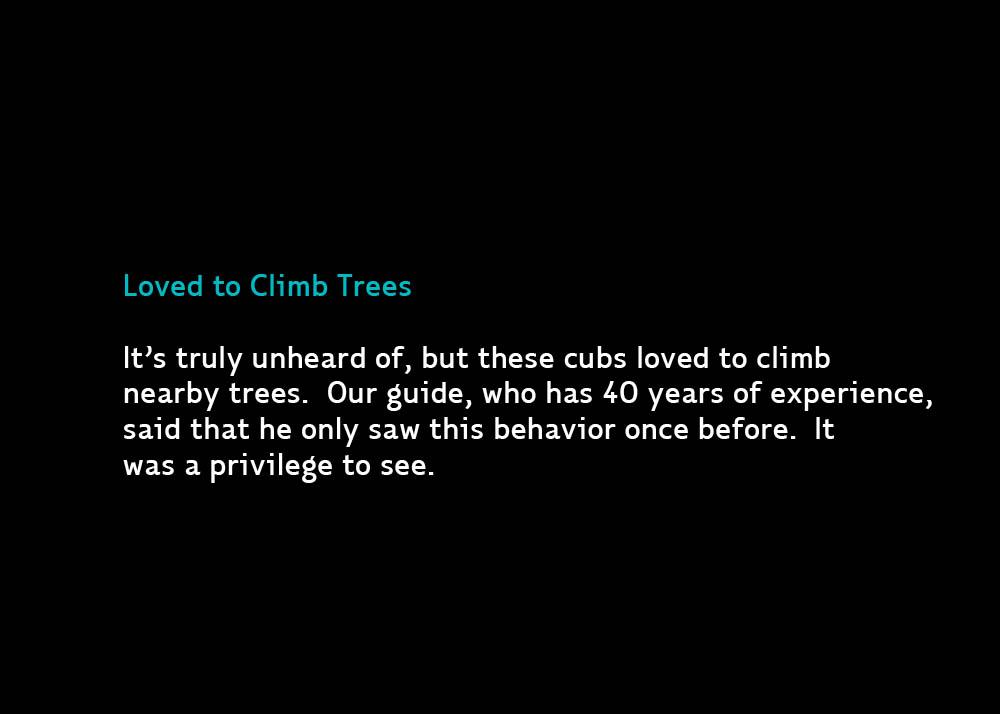 7-ClimbTrees