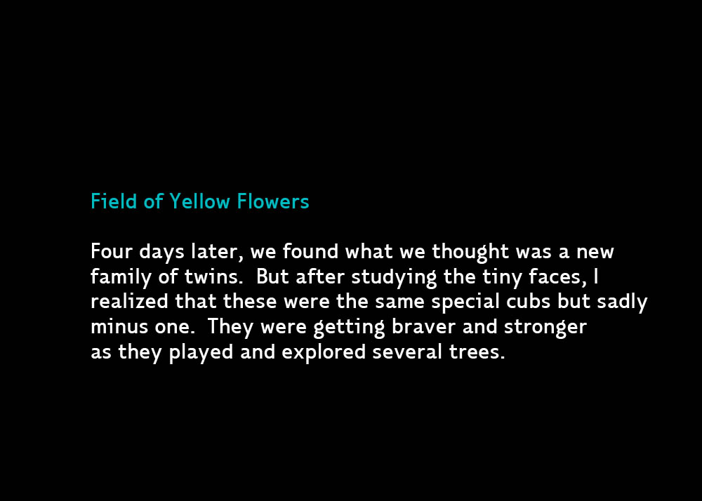 9YellowFlowers-Apr12-2014