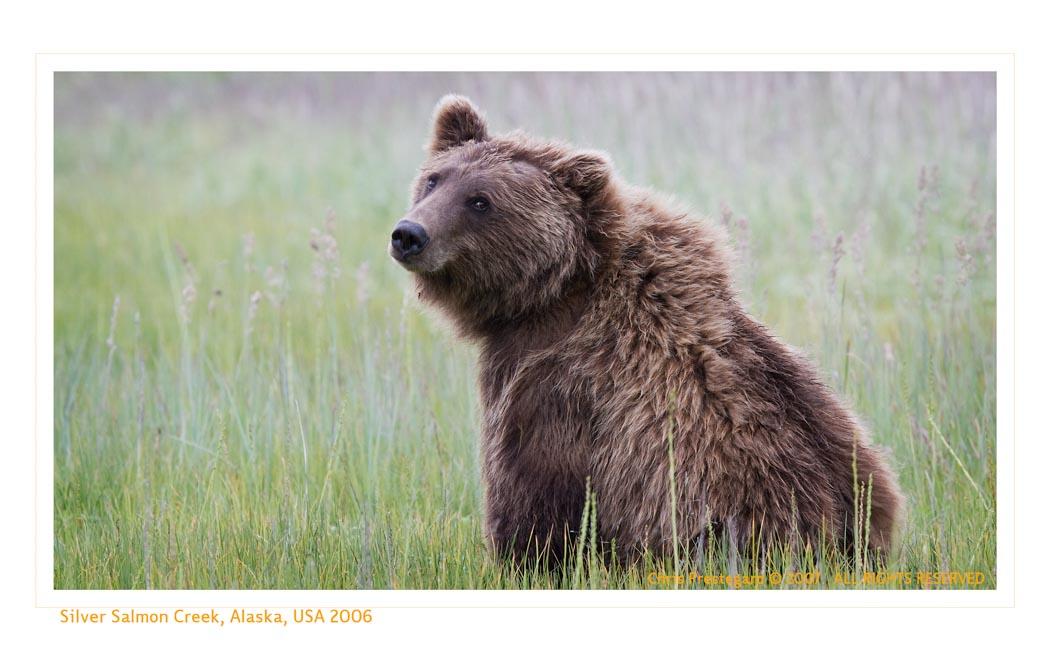 Bear9361_9-15-07