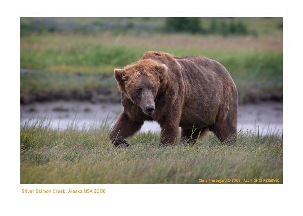 BearGriz9125_9-17-07
