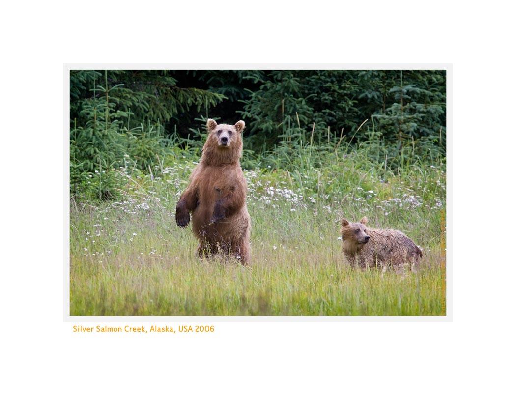 Bears9159b_1-9-08