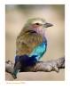 BirdLilac1459_9-16-07