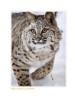 Bobcat5359_12-24-07