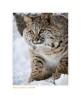 Bobcat5638_12-24-07