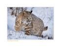 Bobcat5759_12-24-07