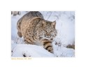 Bobcat5762_12-24-07