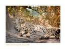 Cheetah4588_9-17-07
