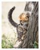 Cheetah 2234