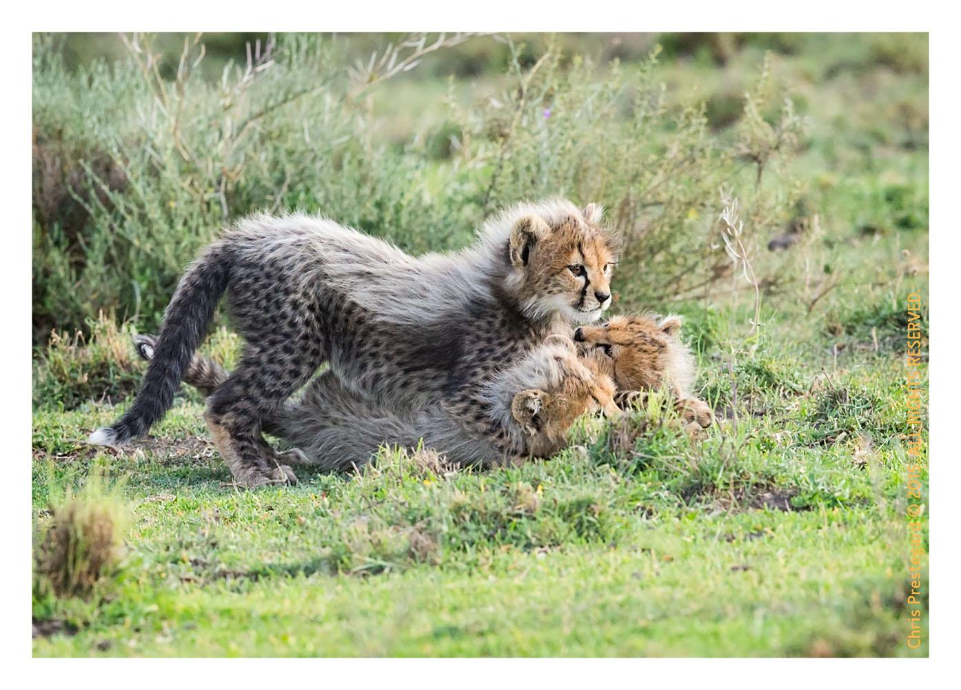 Cheetah 845