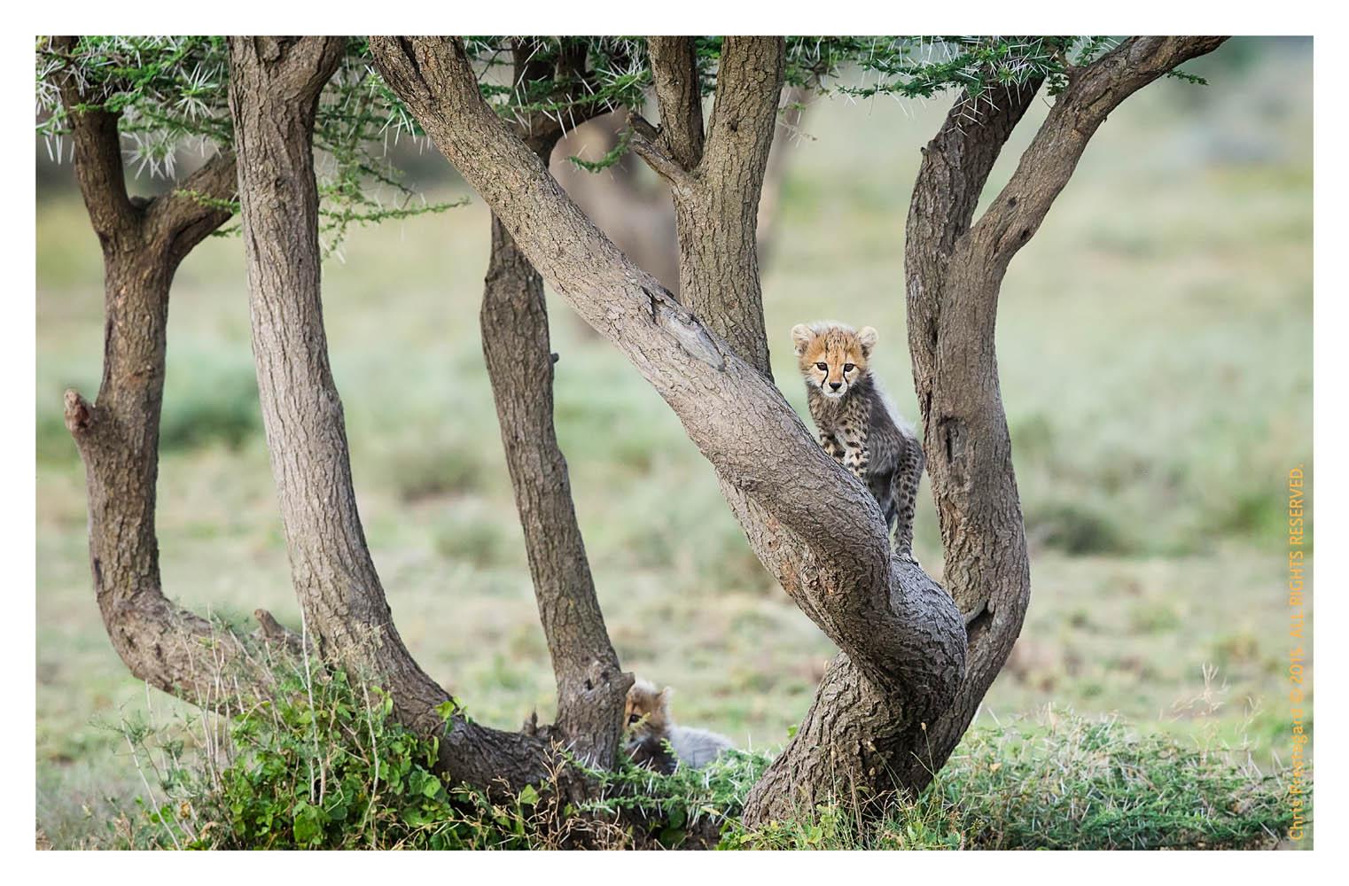 Cheetah 904