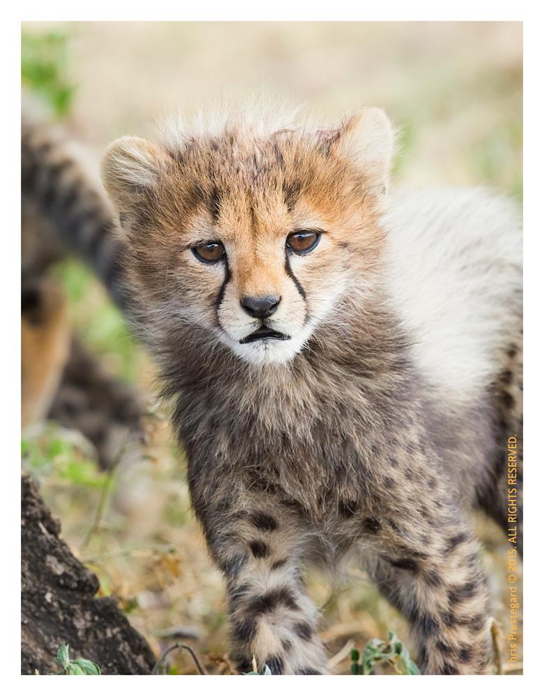 Cheetah 9315