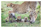 Cheetah 9383