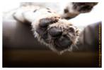 CheetahClaw4961-Jun10-2014