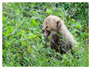 CheetahCub6231-Apr22-2014