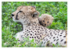 CheetahCub6686-Apr22-2014