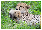CheetahCub6695-Apr22-2014