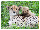 CheetahCub7024-Apr26-2014