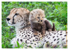 CheetahCub7189-Apr22-2014