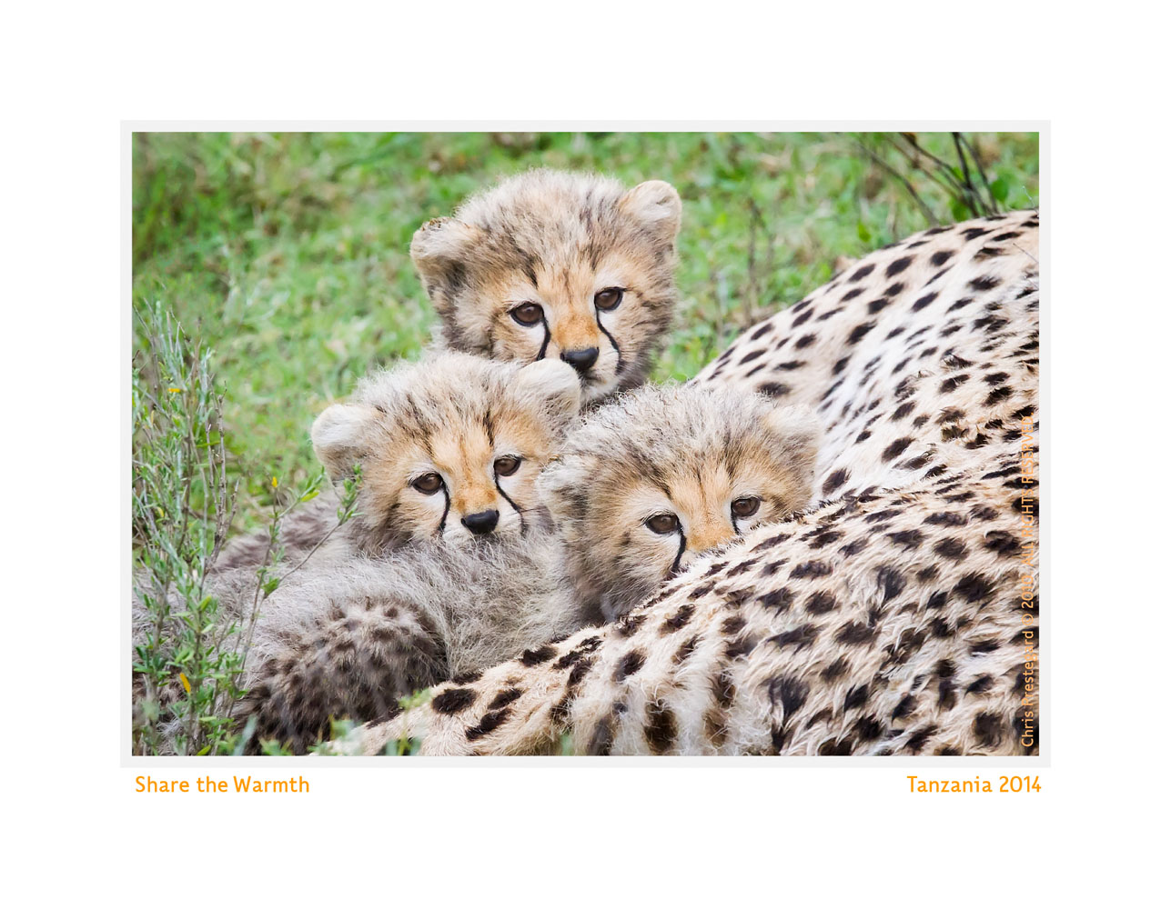 Wildlife Rhythms ™  at Ndutu, Tanzania Feb. 2014