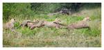 Wildliferhythms in Ndutu, Tanzania Feb. 2013